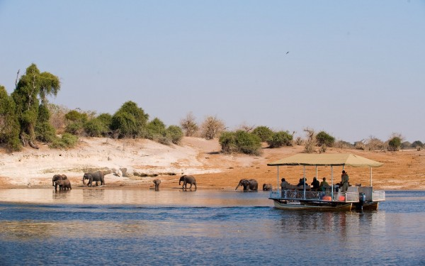 safari in chobe