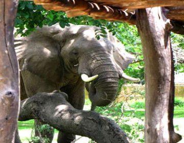 zambia-budget-safari